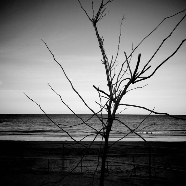 Photo of bare tree branches by the beach
